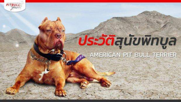 ประวัติสุนัขพิทบูล สุนัขสายพันธุ์อเมริกันพิทบูลเทอร์เรีย American Pit Bull Terrier